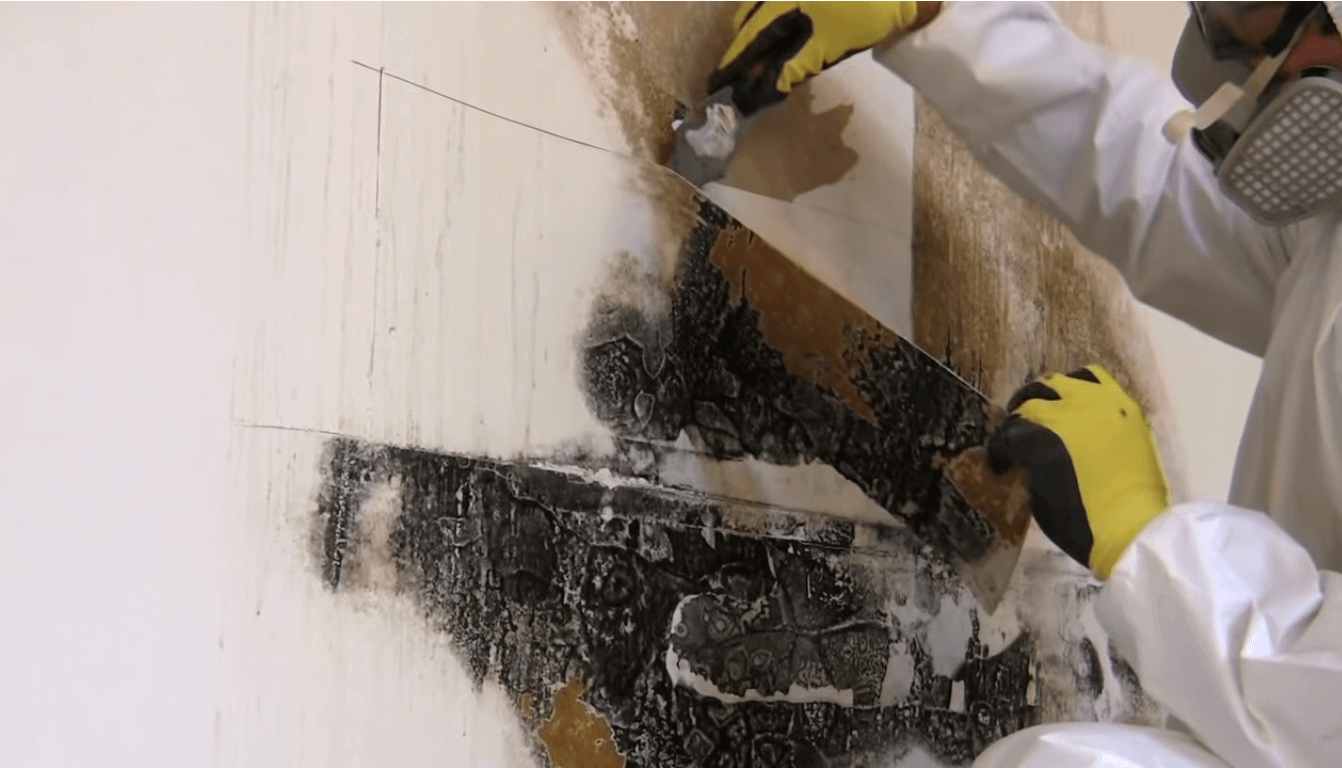 Marietta mold removal and mold prevention services North Atlanta Waterproofing